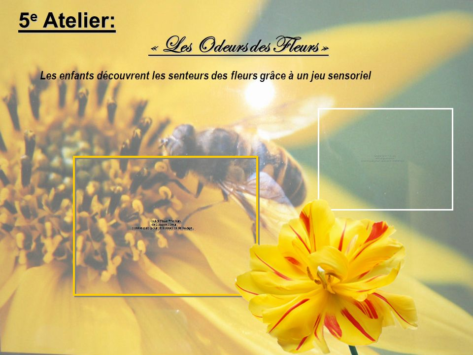 « Les Odeurs des Fleurs » Les enfants découvrent les senteurs des fleurs grâce à un jeu sensoriel 5 e Atelier: