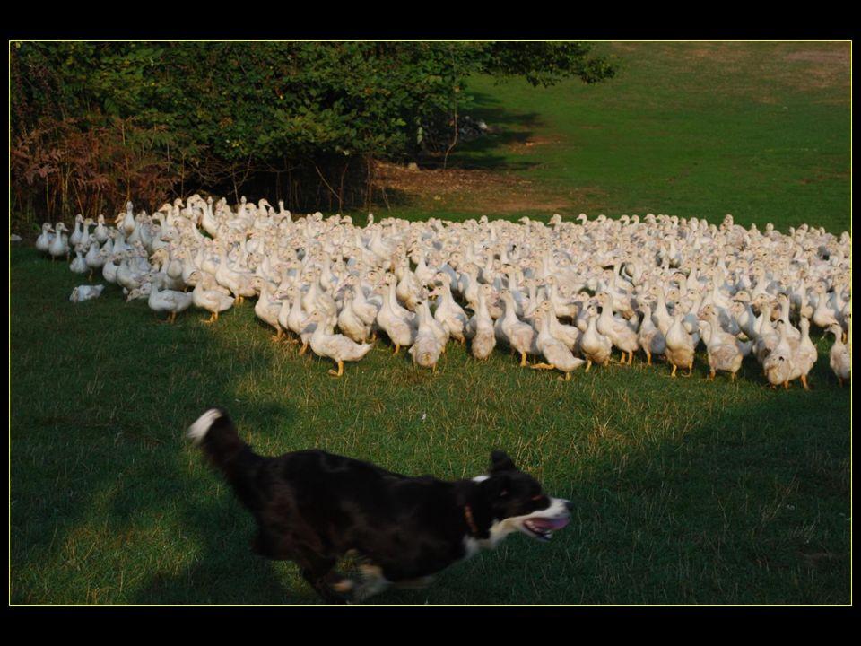 Visite de la Ferme de Grezelade élevage de canards