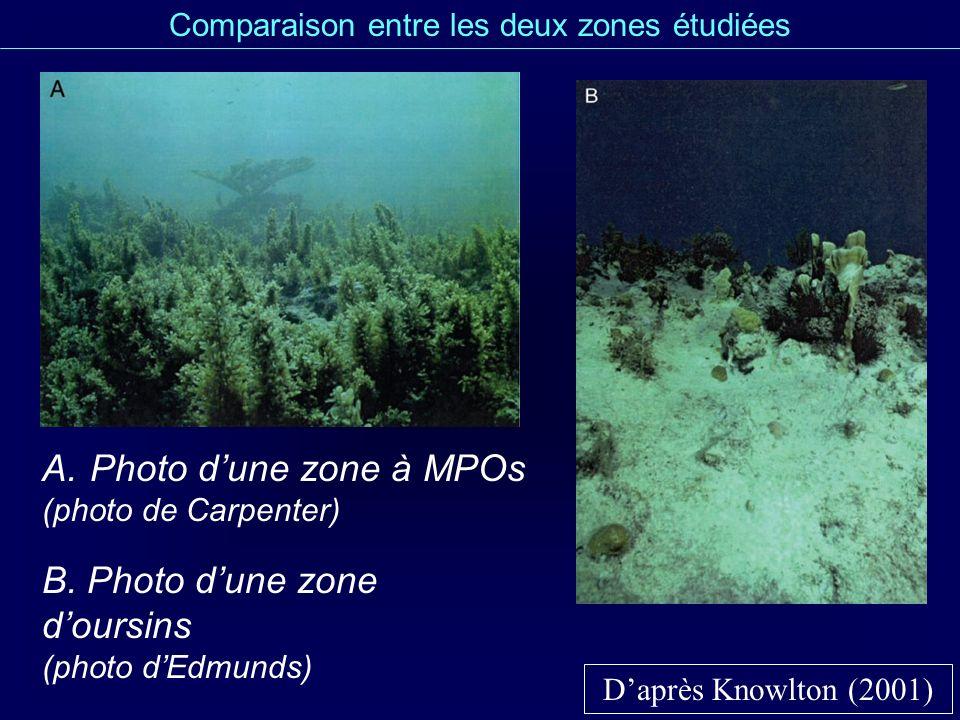 Comparaison entre les deux zones étudiées Daprès Knowlton (2001) A.Photo dune zone à MPOs (photo de Carpenter) B. Photo dune zone doursins (photo dEdm