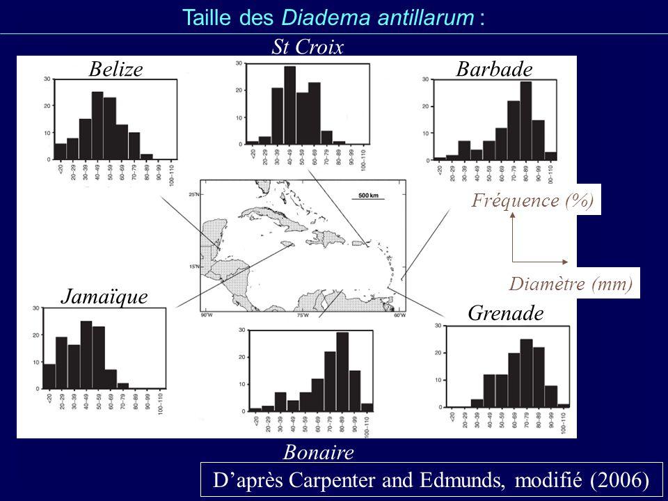 Taille des Diadema antillarum : Daprès Carpenter and Edmunds, modifié (2006) Belize St Croix Barbade Jamaïque Grenade Bonaire Fréquence (%) Diamètre (