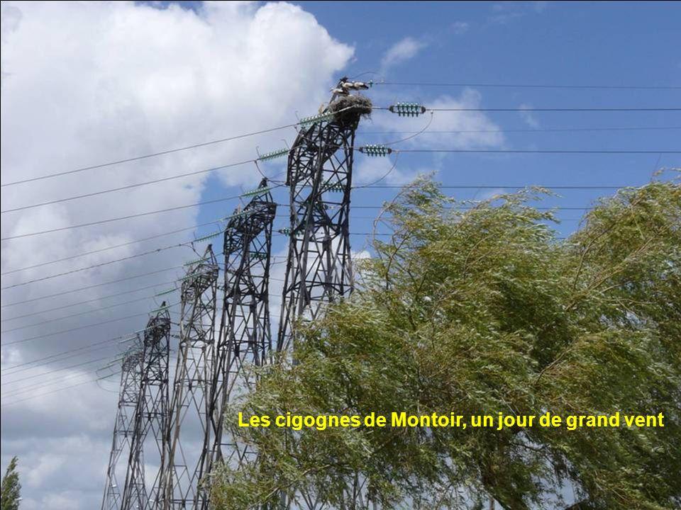 Les cigognes de Montoir, un jour de grand vent