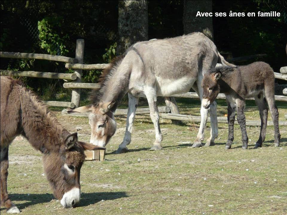 Avec ses ânes en famille