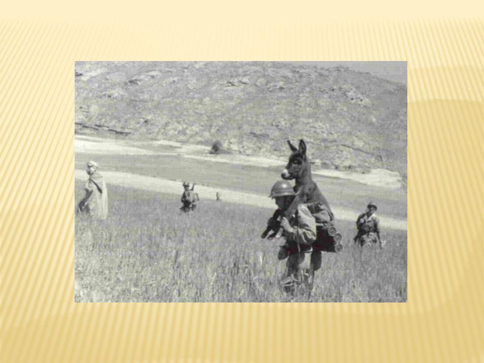 Prises de guerre japonaises (Curtiss P40)