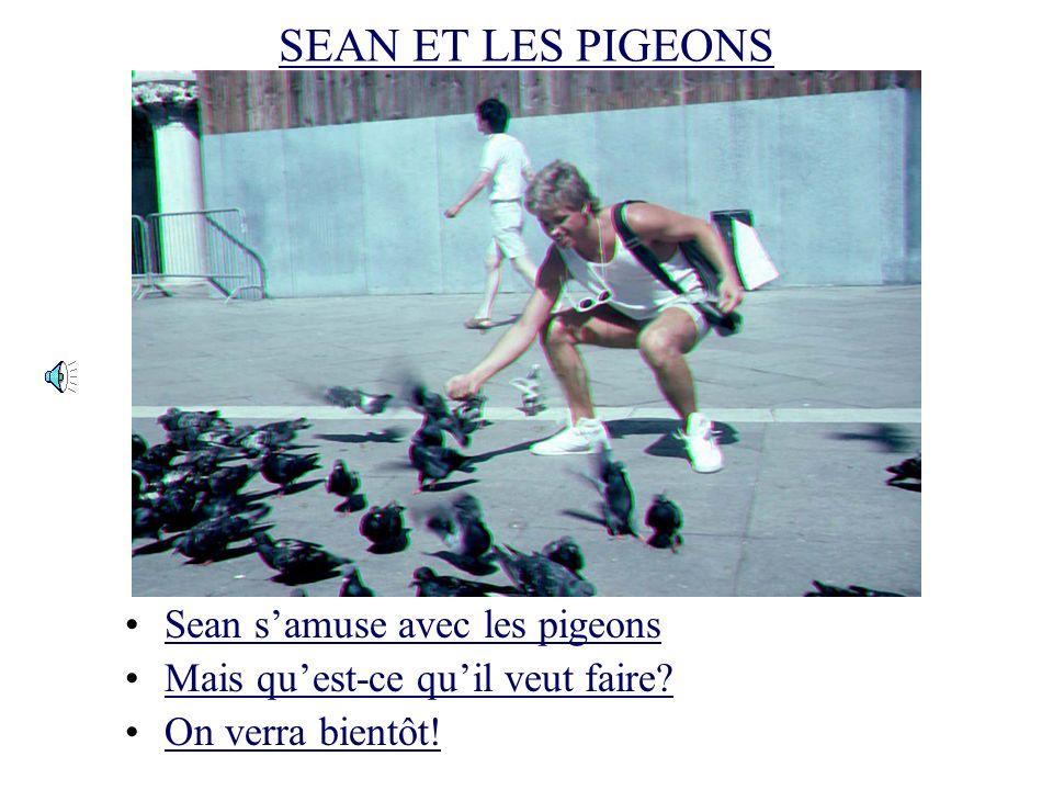 UNE VOLÉE DE PIGEONS A VENISE Attention aux pigeons.