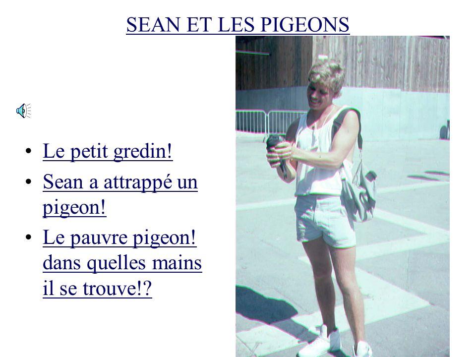 SEAN ET LES PIGEONS Sean samuse avec les pigeons Mais quest-ce quil veut faire? On verra bientôt!On verra bientôt!