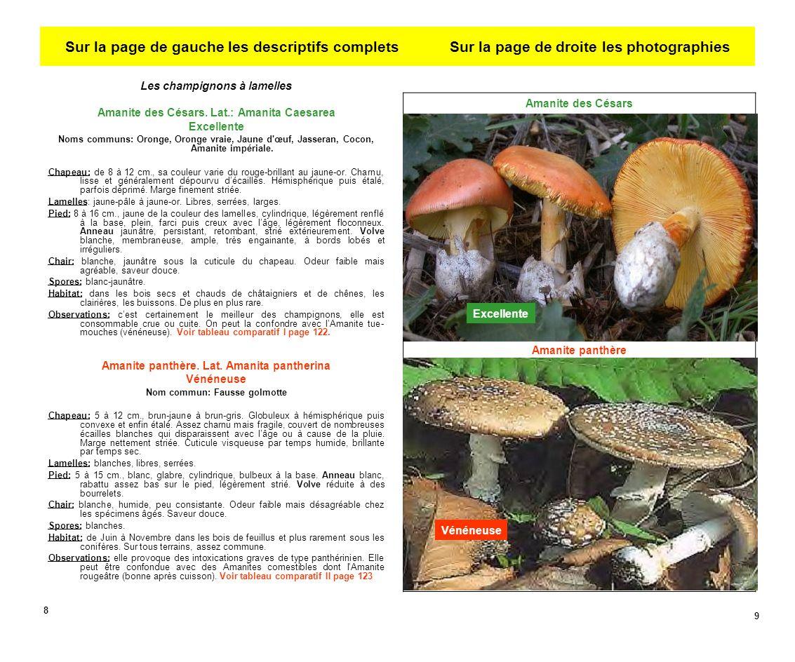 Les champignons à lamelles Amanite des Césars.