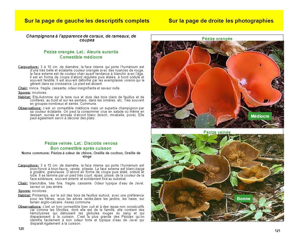 Sur la page de gauche les descriptifs complets Sur la page de droite les photographies Champignons à l apparence de coraux, de rameaux, de coupes Pézize orangée.