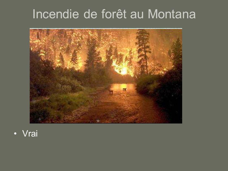 Incendie de forêt au Montana Vrai