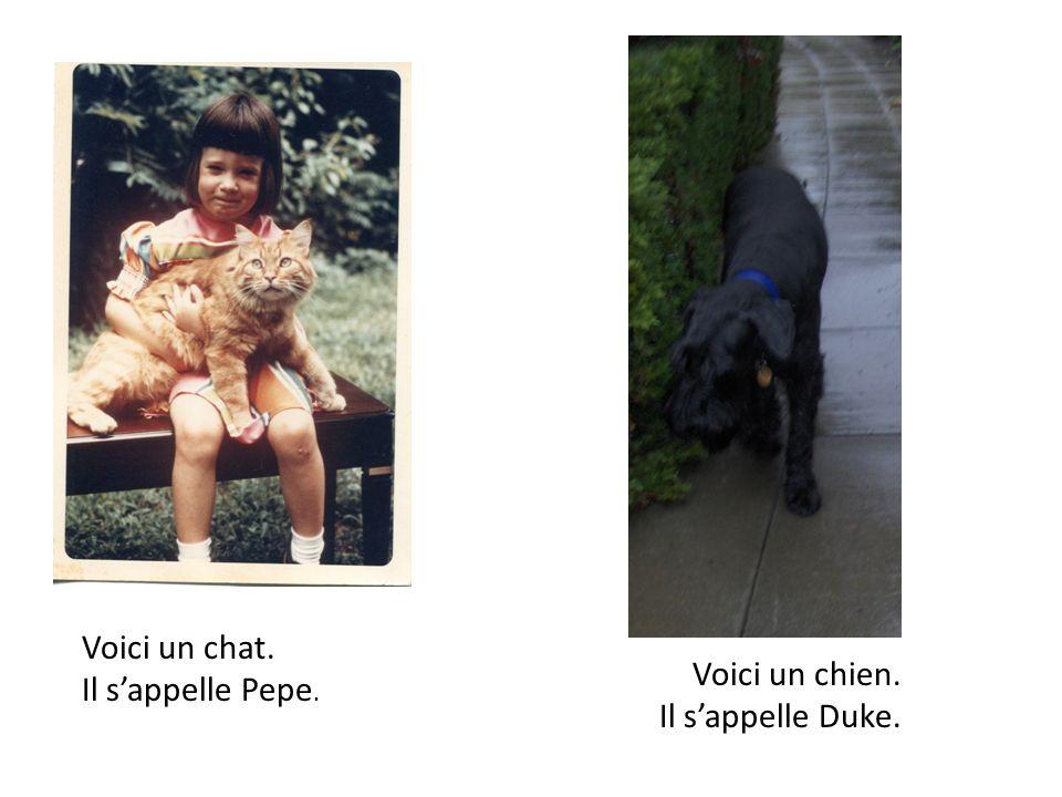 Voici un chat. Il sappelle Pepe. Voici un chien. Il sappelle Duke.