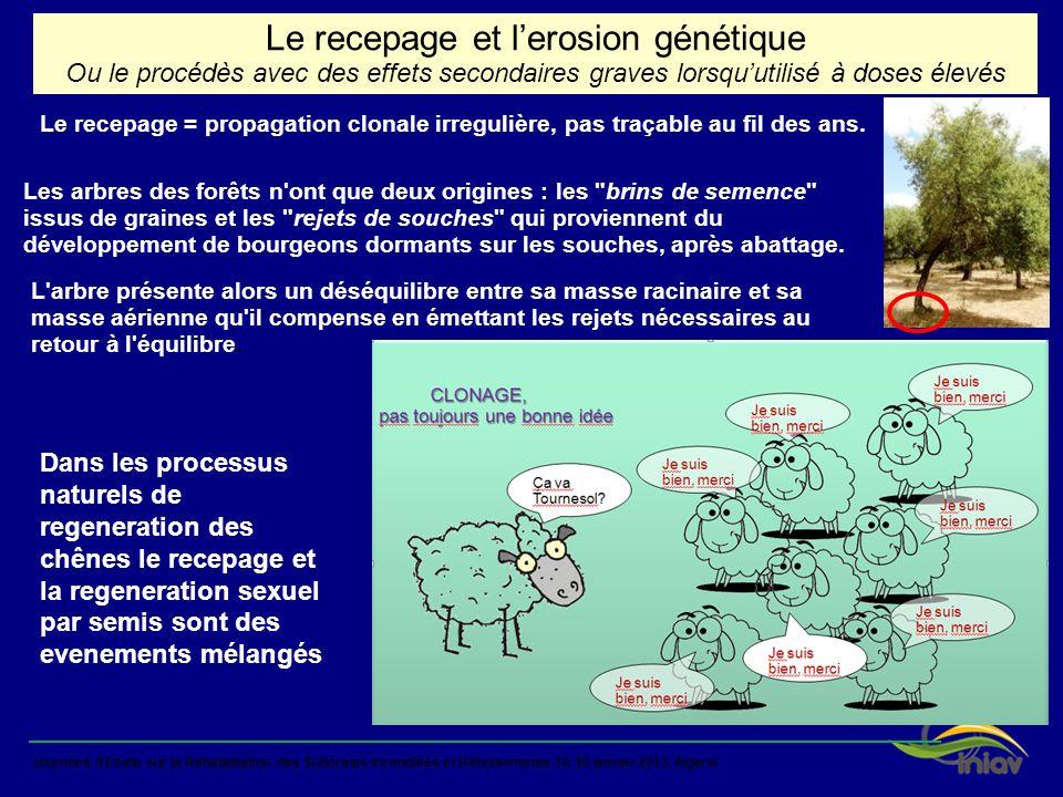 Journées dEtude sur la Réhabilitation des Subéraies Incendiées et Reboisements-16-16 janvier 2013, Algerie Le recepage = propagation clonale irreguliè