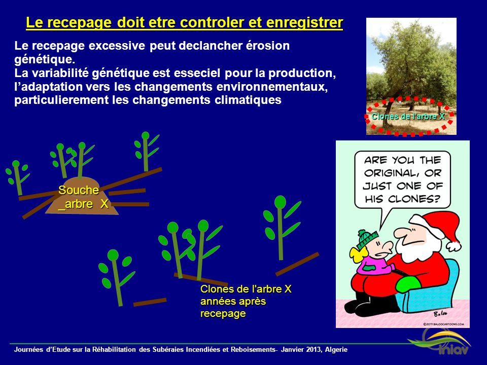 Journées dEtude sur la Réhabilitation des Subéraies Incendiées et Reboisements- Janvier 2013, Algerie Le recepage doit etre controler et enregistrer L