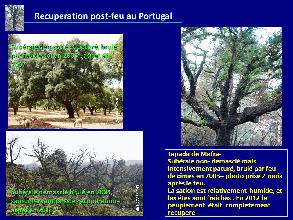 Recuperation post-feu au Portugal Subéraie demasclé et paturé, brulé par feu de sol en 2003– aspet en 2007 Tapada de Mafra- Subéraie non- demasclé mai