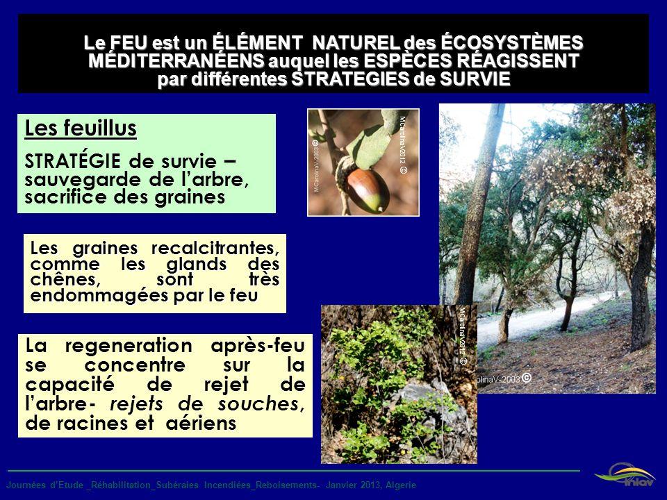 Journées dEtude _Réhabilitation_Subéraies Incendiées_Reboisements- Janvier 2013, Algerie La regeneration après-feu se concentre sur la capacité de rej