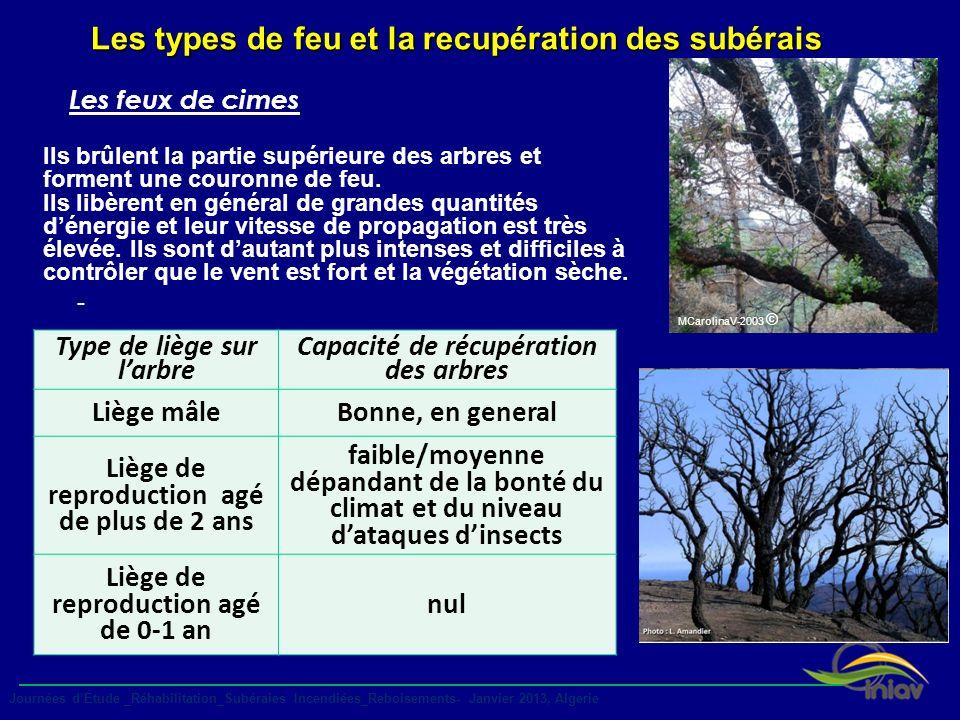 MCarolinaV-2003 © Les types de feu et la recupération des subérais - Type de liège sur larbre Capacité de récupération des arbres Liège mâleBonne, en