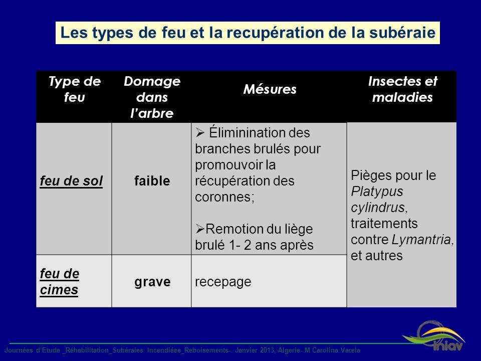 Les types de feu et la recupération de la subéraie Journées dEtude _Réhabilitation_Subéraies Incendiées_Reboisements- Janvier 2013, Algerie- M Carolin
