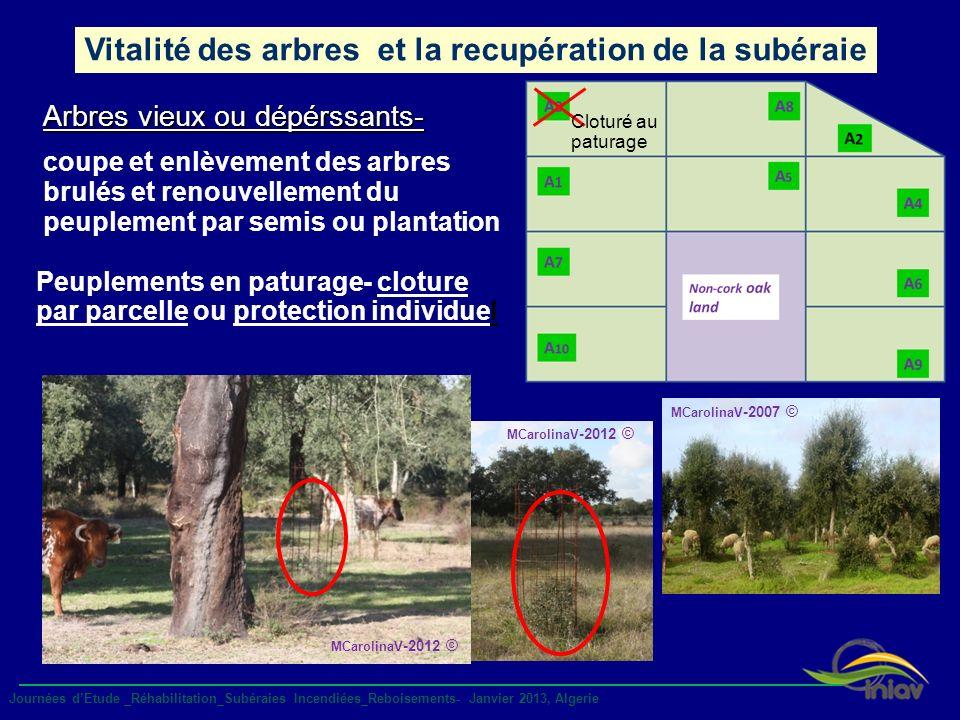 MCarolinaV -2012 © Vitalité des arbres et la recupération de la subéraie Arbres vieux ou dépérssants- coupe et enlèvement des arbres brulés et renouve