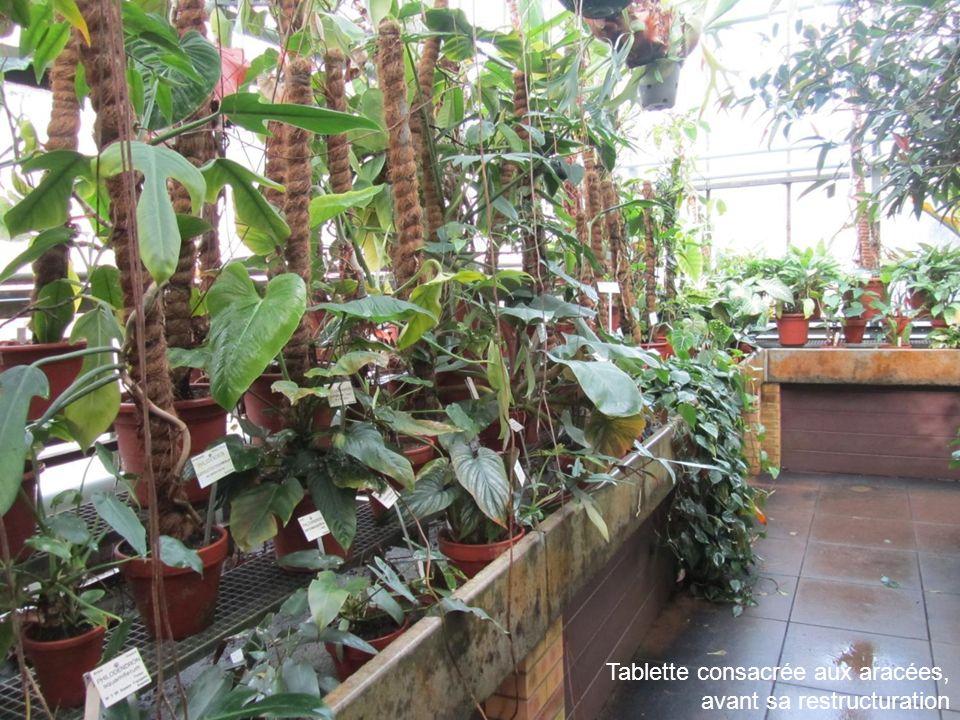 Déménagement des plantes en pots vers une autre serre