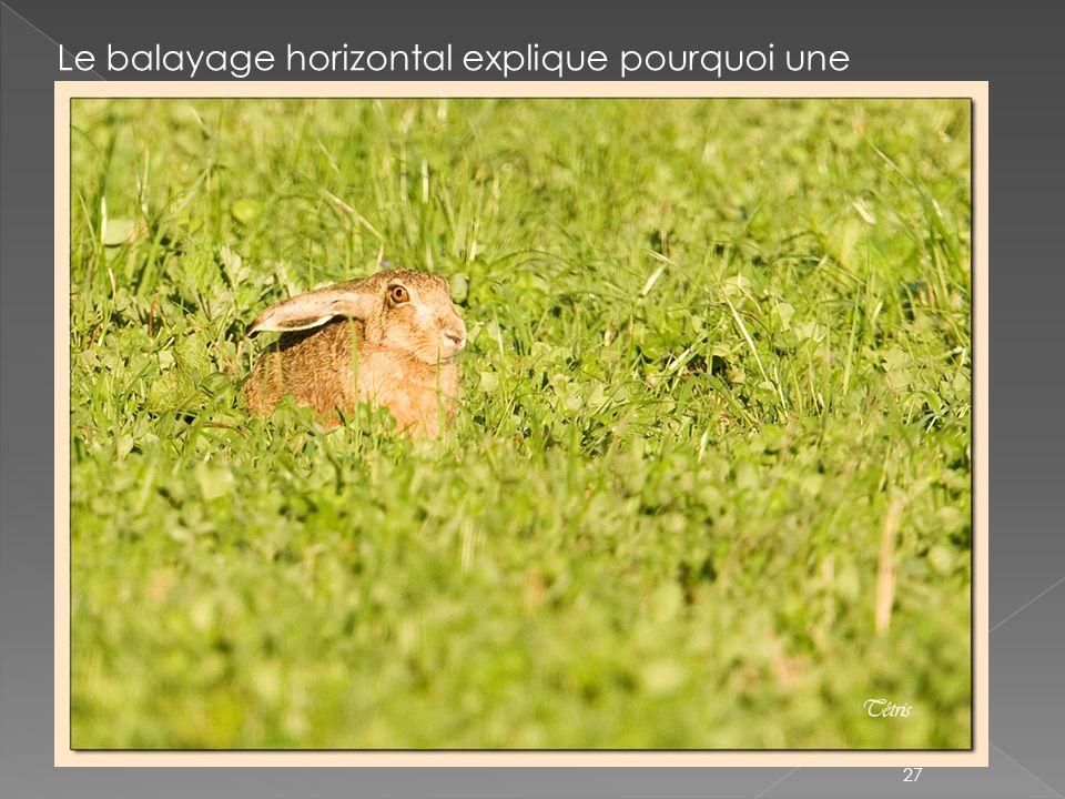Le balayage horizontal explique pourquoi une photographie avec des dominantes horizontales sera reposante pour lœil (évoque le calme, la profondeur et permet d élargir l image) 27