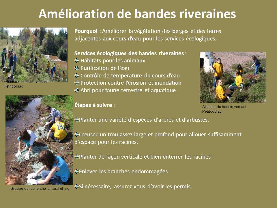 Amélioration de bandes riveraines Pourquoi : Améliorer la végétation des berges et des terres adjacentes aux cours deau pour les services écologiques.