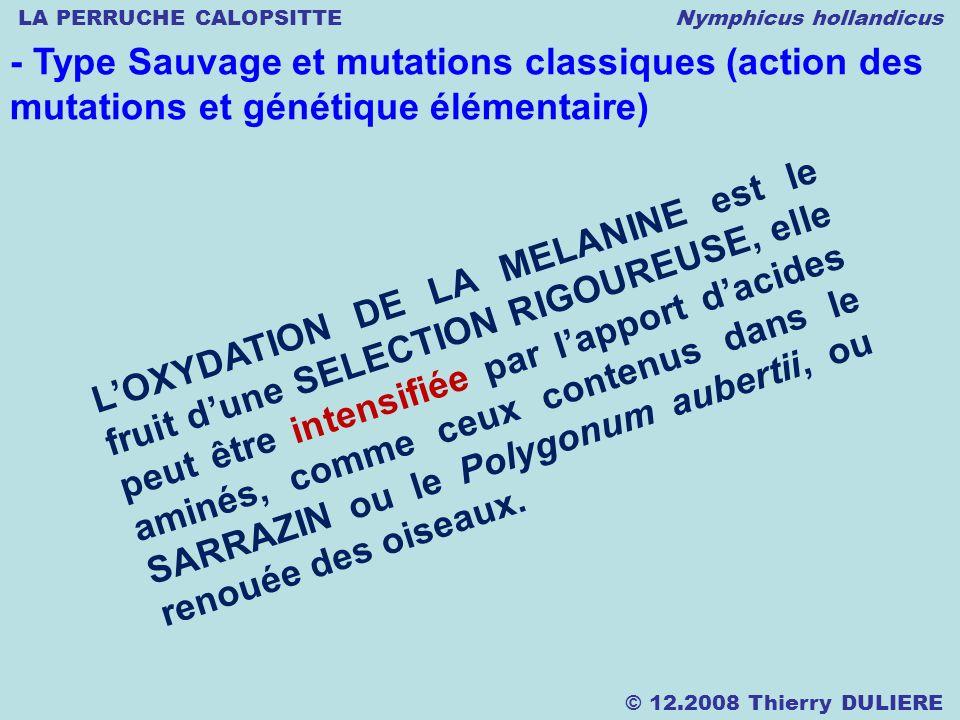 LA PERRUCHE CALOPSITTE Nymphicus hollandicus © 12.2008 Thierry DULIERE - Type Sauvage et mutations classiques (action des mutations et génétique élémentaire) LOXYDATION DE LA MELANINE est le fruit dune SELECTION RIGOUREUSE, elle peut être intensifiée par lapport dacides aminés, comme ceux contenus dans le SARRAZIN ou le Polygonum aubertii, ou renouée des oiseaux.