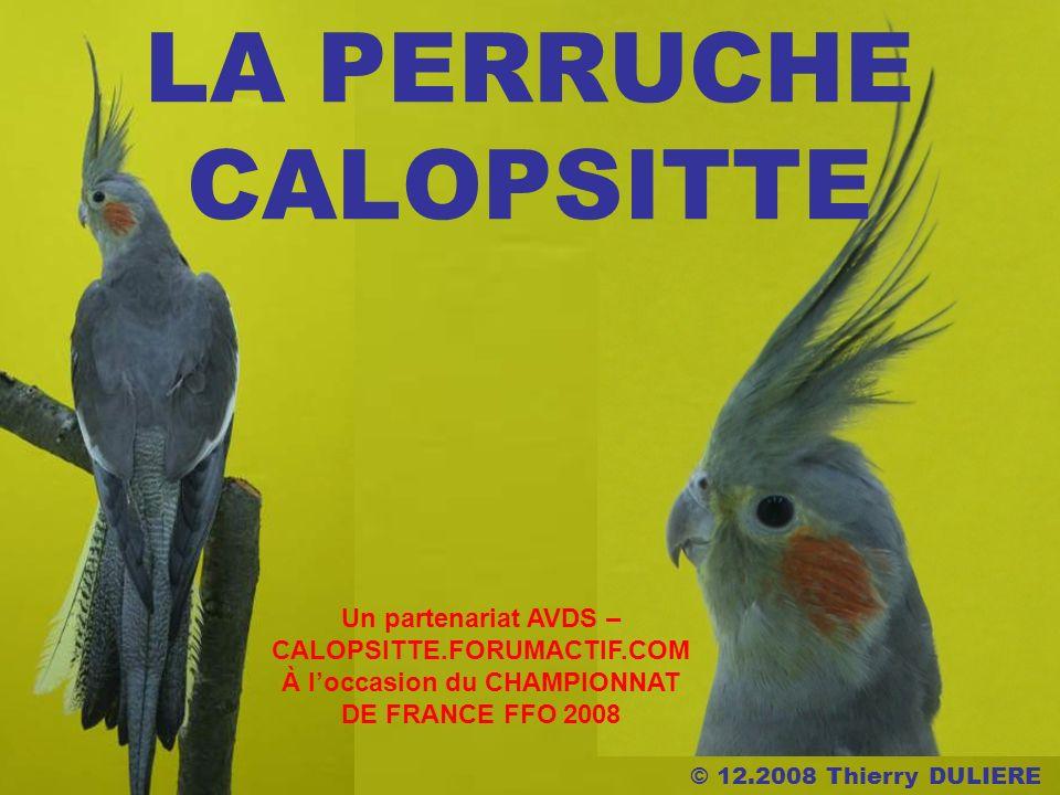 LA PERRUCHE CALOPSITTE Un partenariat AVDS – CALOPSITTE.FORUMACTIF.COM À loccasion du CHAMPIONNAT DE FRANCE FFO 2008