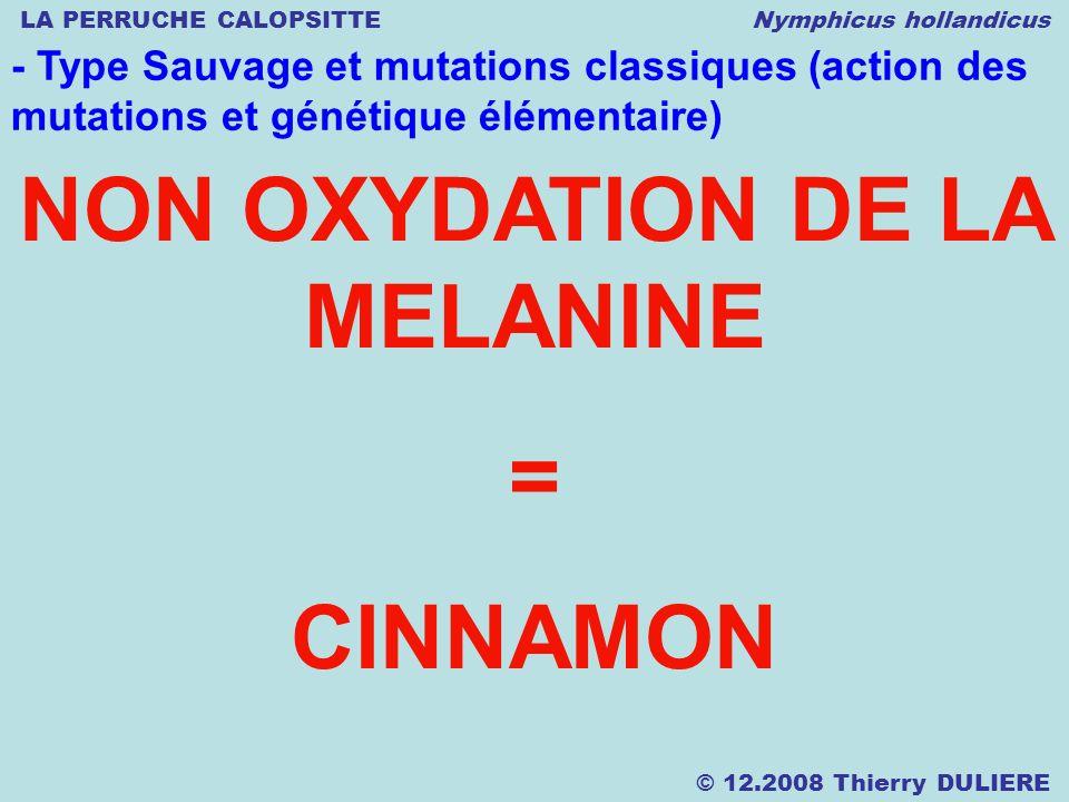 LA PERRUCHE CALOPSITTE Nymphicus hollandicus © 12.2008 Thierry DULIERE - Type Sauvage et mutations classiques (action des mutations et génétique élémentaire) NON OXYDATION DE LA MELANINE = CINNAMON