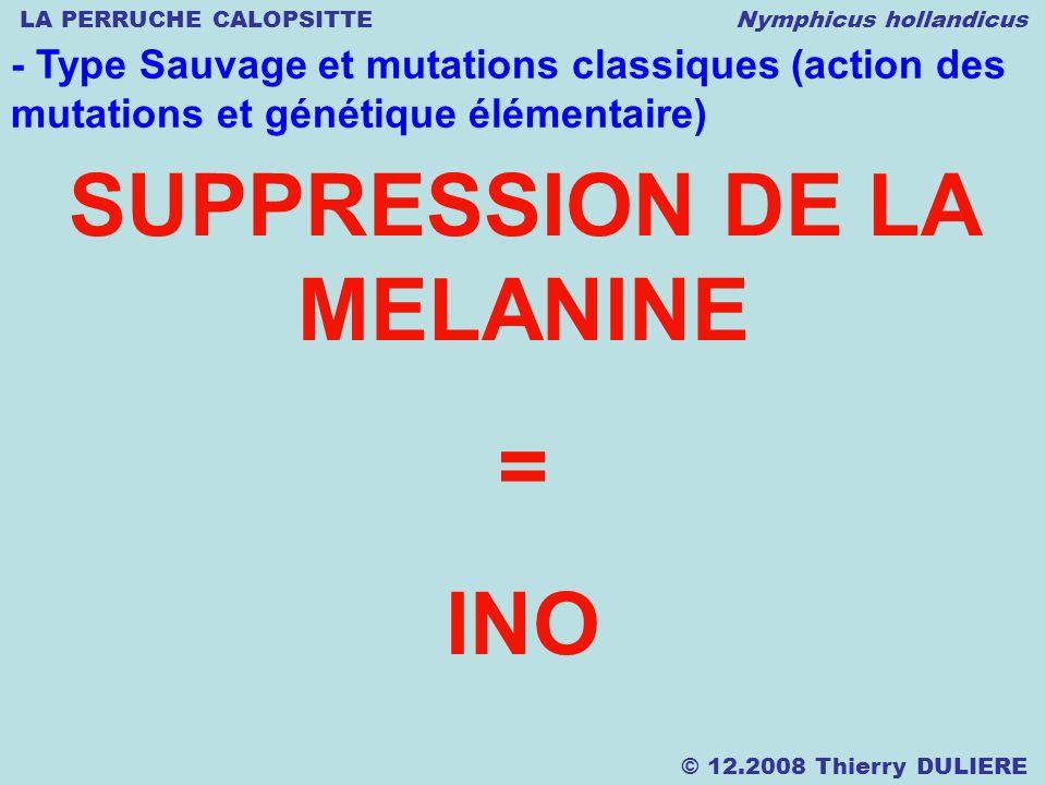 LA PERRUCHE CALOPSITTE Nymphicus hollandicus © 12.2008 Thierry DULIERE - Type Sauvage et mutations classiques (action des mutations et génétique élémentaire) SUPPRESSION DE LA MELANINE = INO