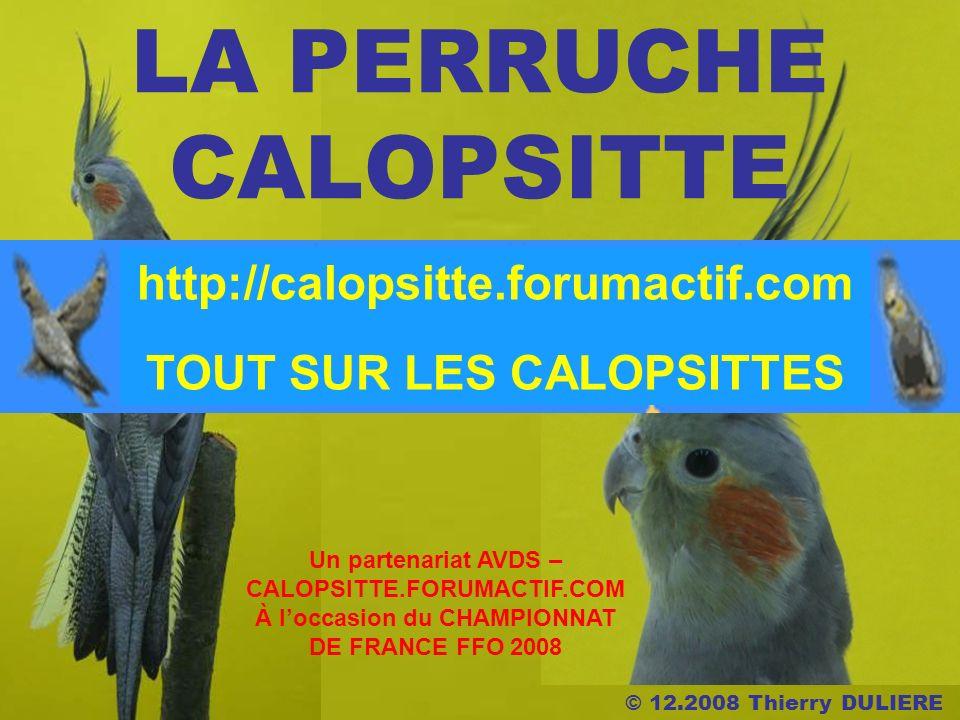 © 12.2008 Thierry DULIERE LA PERRUCHE CALOPSITTE Un partenariat AVDS – CALOPSITTE.FORUMACTIF.COM À loccasion du CHAMPIONNAT DE FRANCE FFO 2008 http://calopsitte.forumactif.com TOUT SUR LES CALOPSITTES