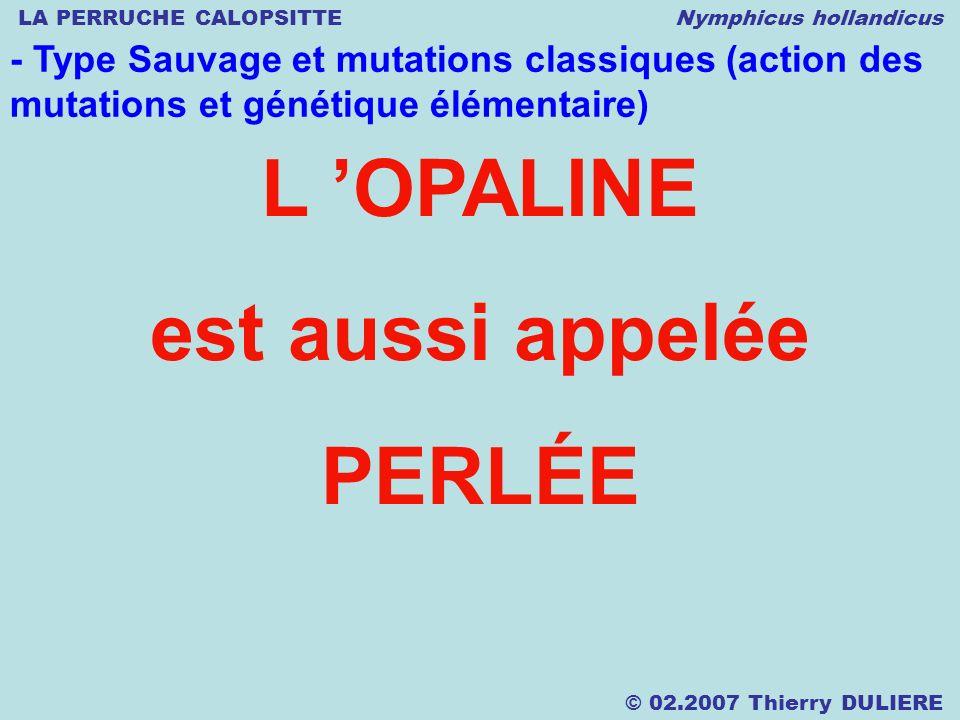 LA PERRUCHE CALOPSITTE Nymphicus hollandicus © 02.2007 Thierry DULIERE - Type Sauvage et mutations classiques (action des mutations et génétique élémentaire) L OPALINE est aussi appelée PERLÉE
