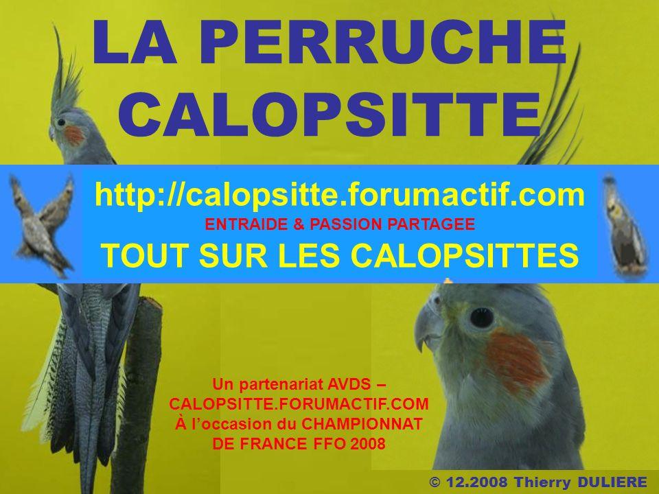 © 12.2008 Thierry DULIERE LA PERRUCHE CALOPSITTE Un partenariat AVDS – CALOPSITTE.FORUMACTIF.COM À loccasion du CHAMPIONNAT DE FRANCE FFO 2008 ENTRAIDE & PASSION PARTAGEE http://calopsitte.forumactif.com TOUT SUR LES CALOPSITTES