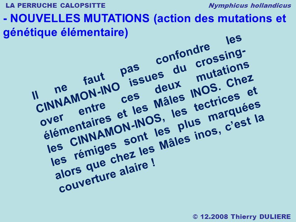 LA PERRUCHE CALOPSITTE Nymphicus hollandicus © 12.2008 Thierry DULIERE - NOUVELLES MUTATIONS (action des mutations et génétique élémentaire) Il ne faut pas confondre les CINNAMON-INO issues du crossing- over entre ces deux mutations élémentaires et les Mâles INOS.
