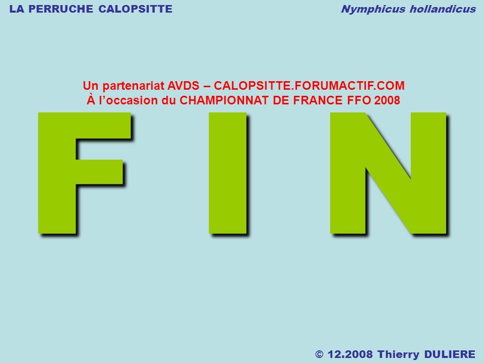 LA PERRUCHE CALOPSITTE Nymphicus hollandicus © 12.2008 Thierry DULIERE F I N Un partenariat AVDS – CALOPSITTE.FORUMACTIF.COM À loccasion du CHAMPIONNAT DE FRANCE FFO 2008
