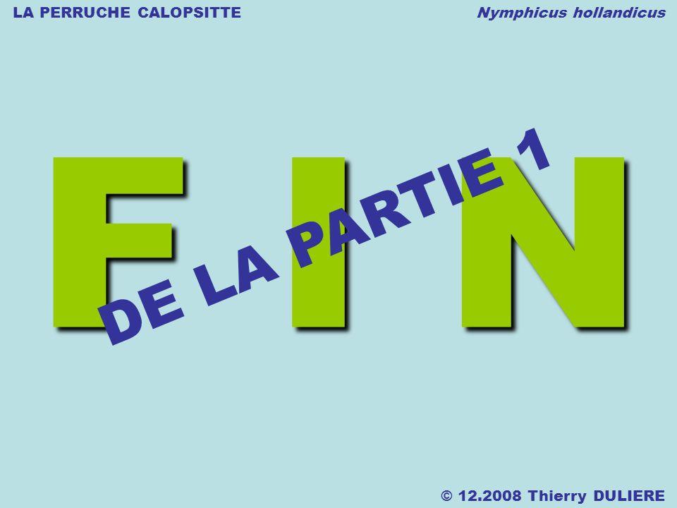 LA PERRUCHE CALOPSITTE Nymphicus hollandicus © 12.2008 Thierry DULIERE F I N DE LA PARTIE 1