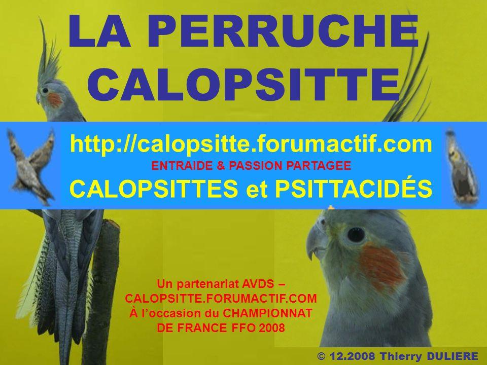 © 12.2008 Thierry DULIERE LA PERRUCHE CALOPSITTE Un partenariat AVDS – CALOPSITTE.FORUMACTIF.COM À loccasion du CHAMPIONNAT DE FRANCE FFO 2008 ENTRAIDE & PASSION PARTAGEE CALOPSITTES et PSITTACIDÉS http://calopsitte.forumactif.com