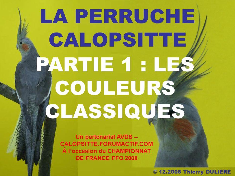 © 12.2008 Thierry DULIERE LA PERRUCHE CALOPSITTE PARTIE 1 : LES COULEURS CLASSIQUES Un partenariat AVDS – CALOPSITTE.FORUMACTIF.COM À loccasion du CHAMPIONNAT DE FRANCE FFO 2008