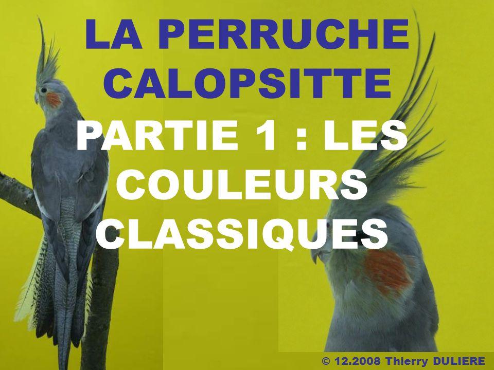 © 12.2008 Thierry DULIERE LA PERRUCHE CALOPSITTE PARTIE 1 : LES COULEURS CLASSIQUES