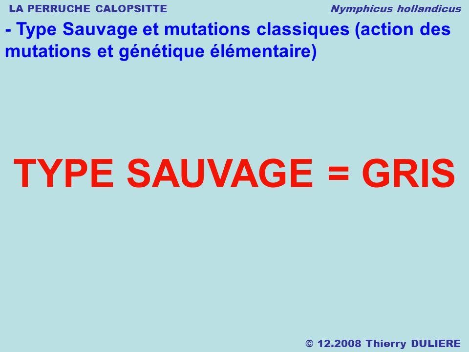 LA PERRUCHE CALOPSITTE Nymphicus hollandicus © 12.2008 Thierry DULIERE - Type Sauvage et mutations classiques (action des mutations et génétique élémentaire) TYPE SAUVAGE = GRIS
