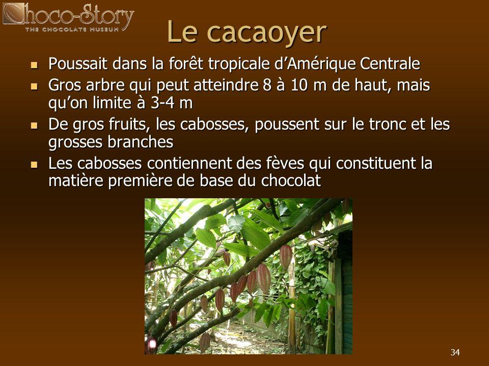 34 Le cacaoyer Poussait dans la forêt tropicale dAmérique Centrale Poussait dans la forêt tropicale dAmérique Centrale Gros arbre qui peut atteindre 8