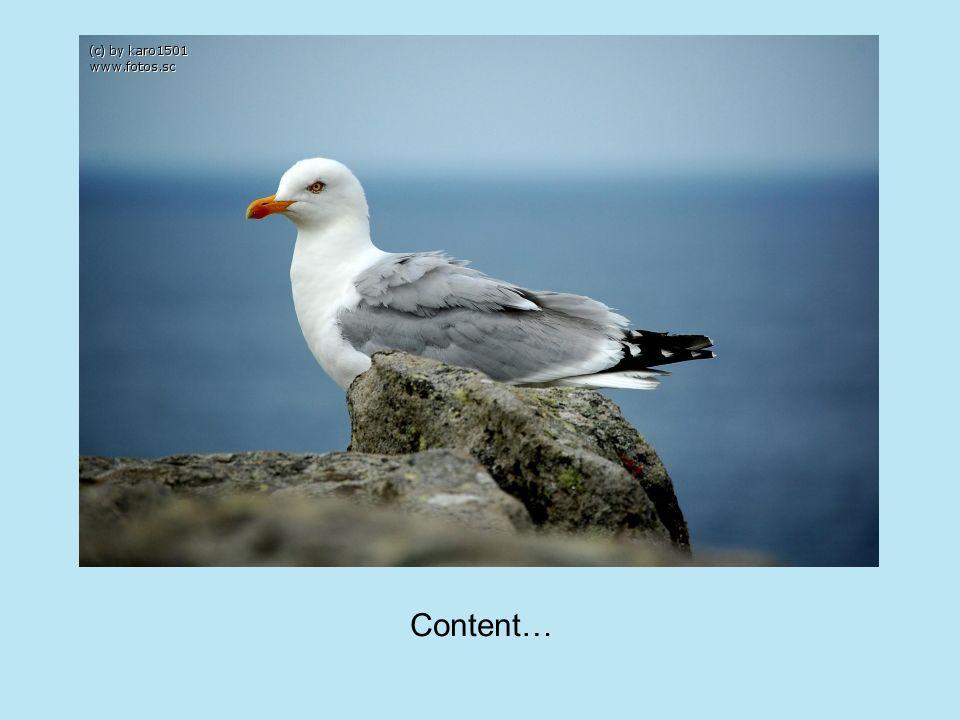 Content…