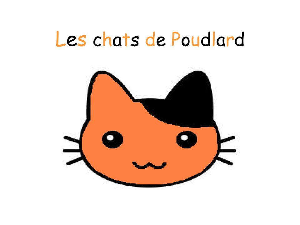 IntroductionIntroduction Il est vrai que beaucoup de chats rôdent dans lécole de Poudlard.
