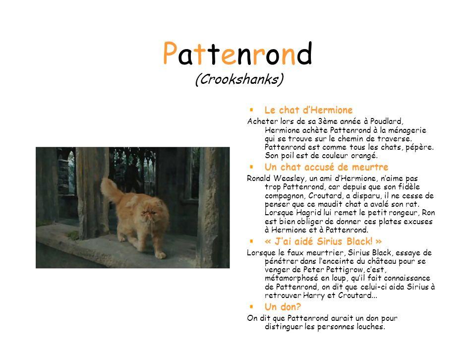 Pattenrond (Crookshanks) Le chat dHermione Acheter lors de sa 3ème année à Poudlard, Hermione achète Pattenrond à la ménagerie qui se trouve sur le chemin de traverse.
