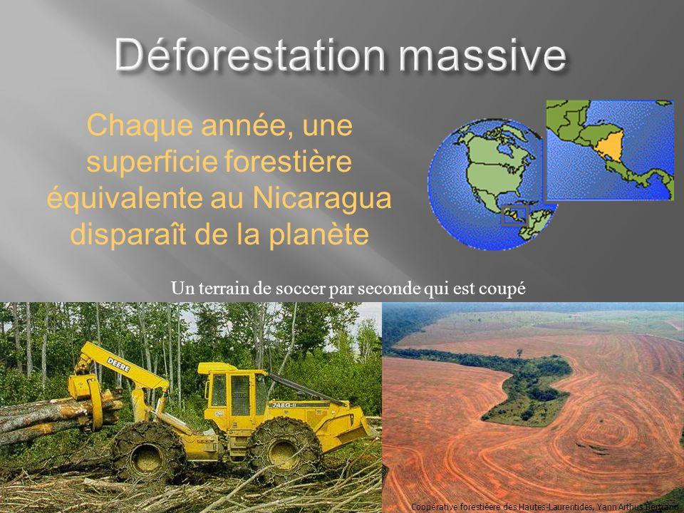 Chaque année, une superficie forestière équivalente au Nicaragua disparaît de la planète Coopérative forestièere des Hautes-Laurentides, Yann Arthus B