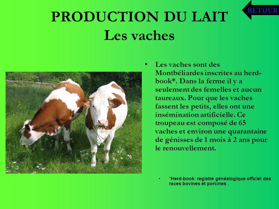 PRODUCTION DU LAIT Les vaches *Herd-book: registre généalogique officiel des races bovines et porcines. Les vaches sont des Montbéliardes inscrites au
