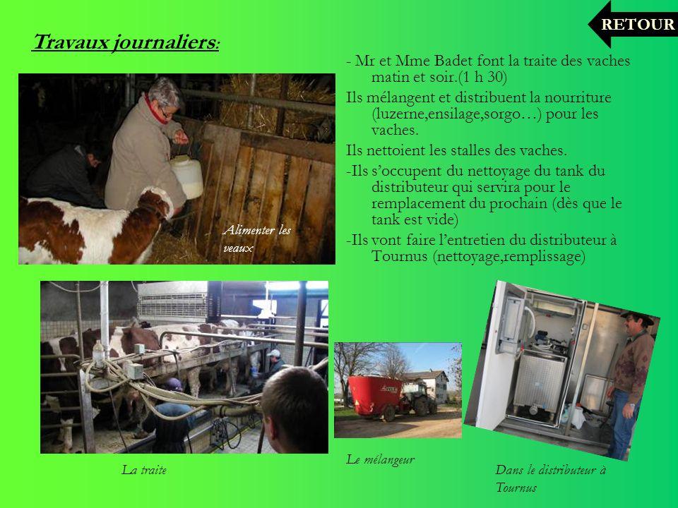 - Mr et Mme Badet font la traite des vaches matin et soir.(1 h 30) Ils mélangent et distribuent la nourriture (luzerne,ensilage,sorgo…) pour les vache