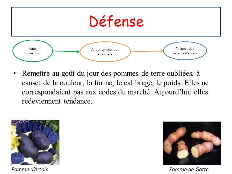 Remettre au goût du jour des pommes de terre oubliées, à cause: de la couleur, la forme, le calibrage, le poids. Elles ne correspondaient pas aux code
