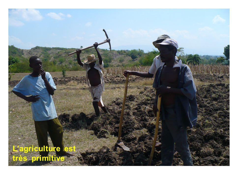 Lagriculture est très primitive