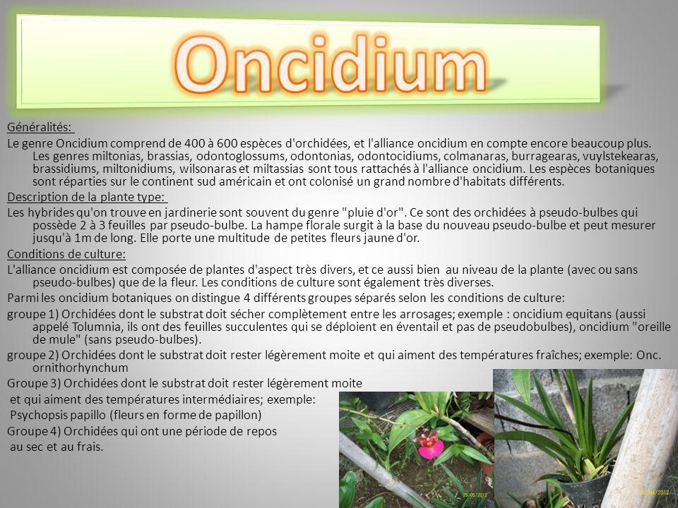 Généralités: Le genre Oncidium comprend de 400 à 600 espèces d orchidées, et l alliance oncidium en compte encore beaucoup plus.