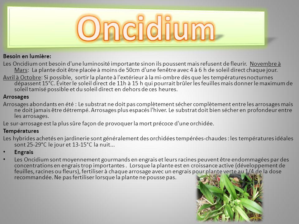 Besoin en lumière: Les Oncidium ont besoin d une luminosité importante sinon ils poussent mais refusent de fleurir.