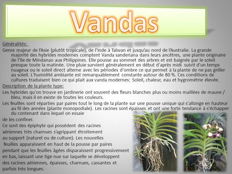 Règne : Plantae Division : Magnoliophyta Classe : Liliopsida Ordre : Asparagales Famille : Orchidaceae Sous-famille : Epidendroideae Tribu : Epidendreae Sous-tribu : Laeliinae Alliance : Epidendrum Genre : Epidendrum