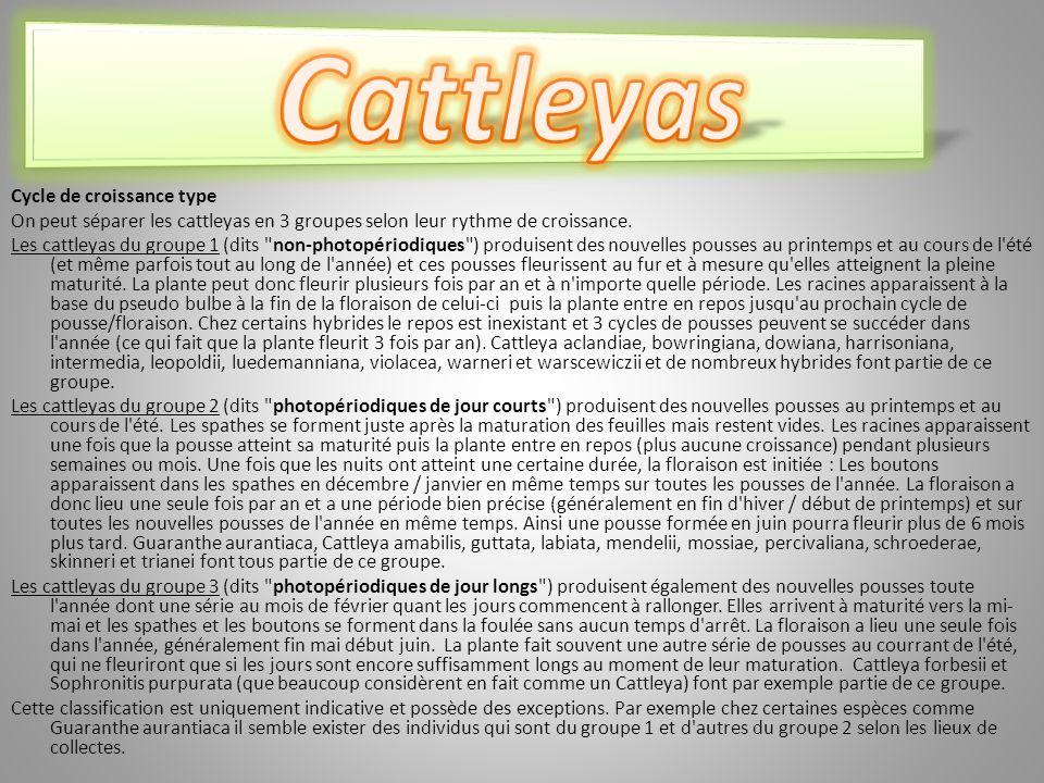 Cycle de croissance type On peut séparer les cattleyas en 3 groupes selon leur rythme de croissance.